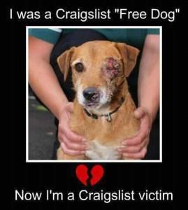 Craigslist free to good home