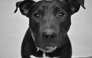 View all adoptable dogs
