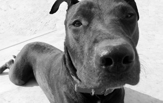 Adoptable Dogs Tucson